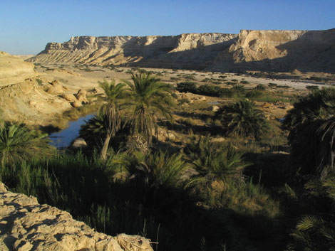 An oasis in Oman's desert. The scheme will supply treated water for irrigation, reducing pressure on natural sources in the water-scarce country.