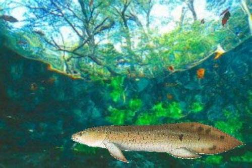 The Burnett River Dam project has met with objections on environmental grounds because it is one of the only two habitats in the world for the rare Queensland Lungfish. However, it has also received much support from a variety of sources.