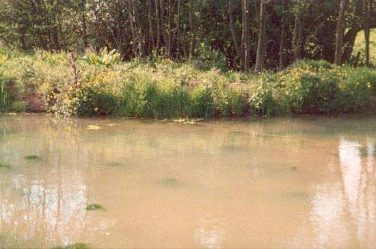 The high color, organic content and turbidity of the Tsulquate River source posed significant challenges.