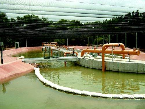 Part of the 'Refugium' the rearing and breeding facility for the Rio Grande Silvery Minnow, an indigenous endangered species.