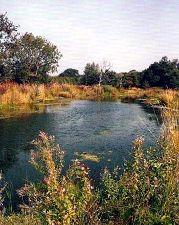 The conservation area at Millbrook has proven to be a very valuable habitat for wildlife.
