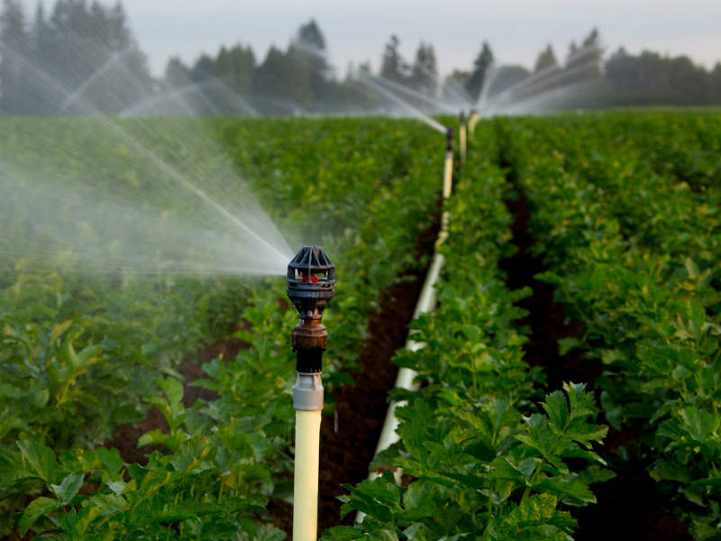 automated sprinklers