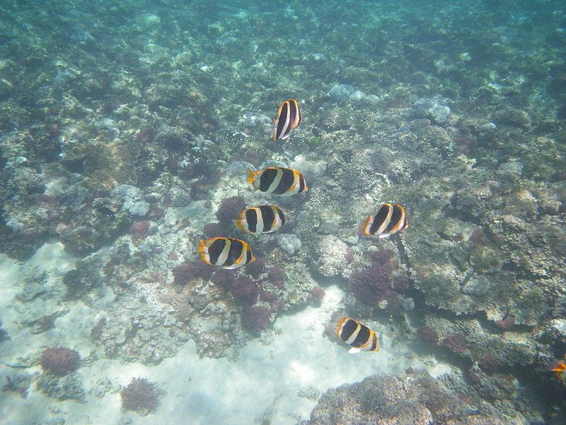 EPA, Aquatic life survey